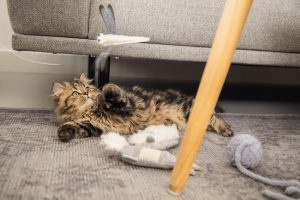Beeztees Kitten Konijn - Kattenspeelgoed - Incl. Krinkel - 20x5x3 cm
