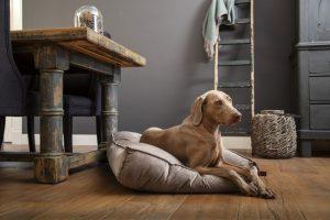 Designed by Lotte Nalino Ligkussen - Hond - Fluweel