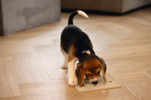 Beeztees Puppy Likmat Diza - Hondenspeelgoed - Rubber - Grijs - 20x20 cm